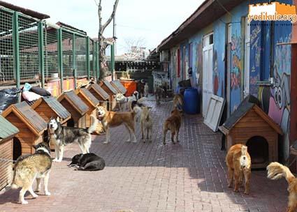 Fatih Belediyesi - Yedikule Hayvan Barınağı